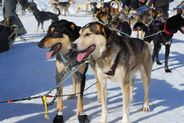 breckenridge Dog Sledding